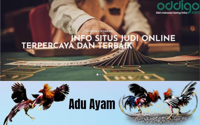 Adu Ayam Online